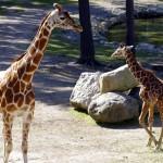 Kolmårdeni safari kaelkirjakud